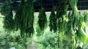 Pěstování bylin ve vlastní ekozahradě